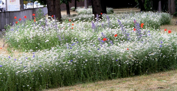 Commercial Road Meadow