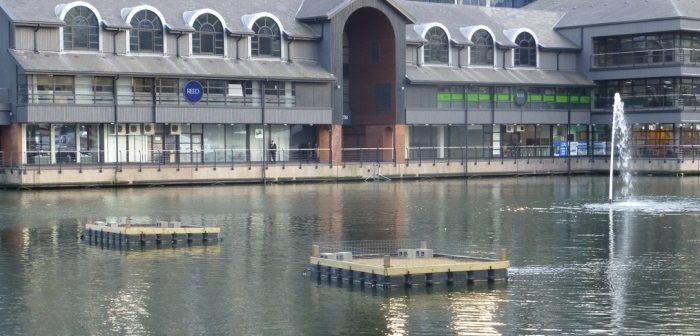 Tern rafts in Millwall Dock