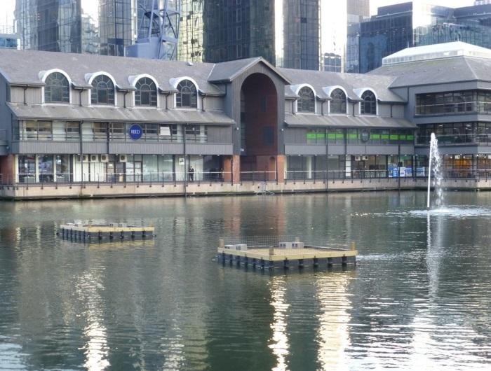 Tern rafts in Millwall Dock