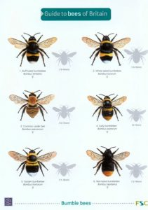 FSC Bee Identification Guide