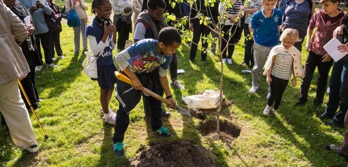 Black Poplar planting at All Saints