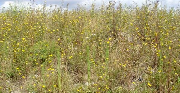 Brownfield habitat