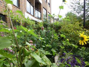 Award-winning wildlife garden