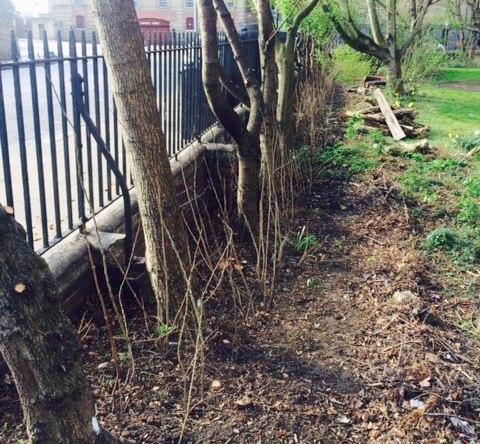 New hedge at Matilda House