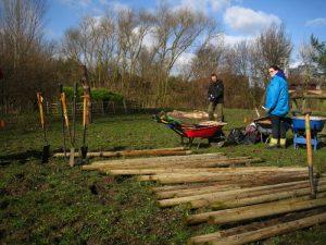 Preparing to plant trees