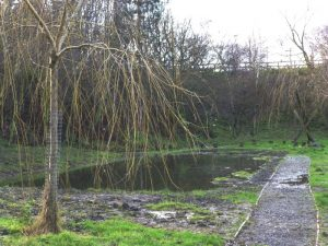 Mudchute ponds