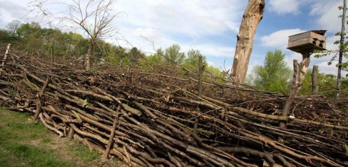 Dead hedge at Mudchute