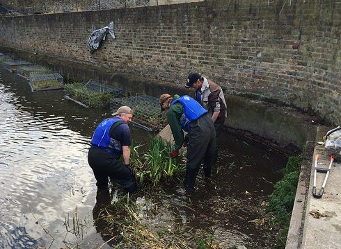 Planting in Regent's Canal