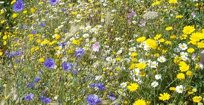 biodiversity action plans Further information on local biodiversity action plans:  .