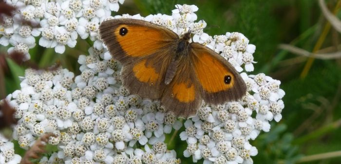 Gatekeeper on Yarrow