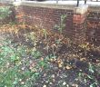 Newly-planted hedge at Matilda House