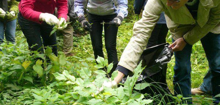 Picking nettles