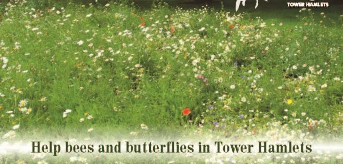 Free wildflower seed promotional post card