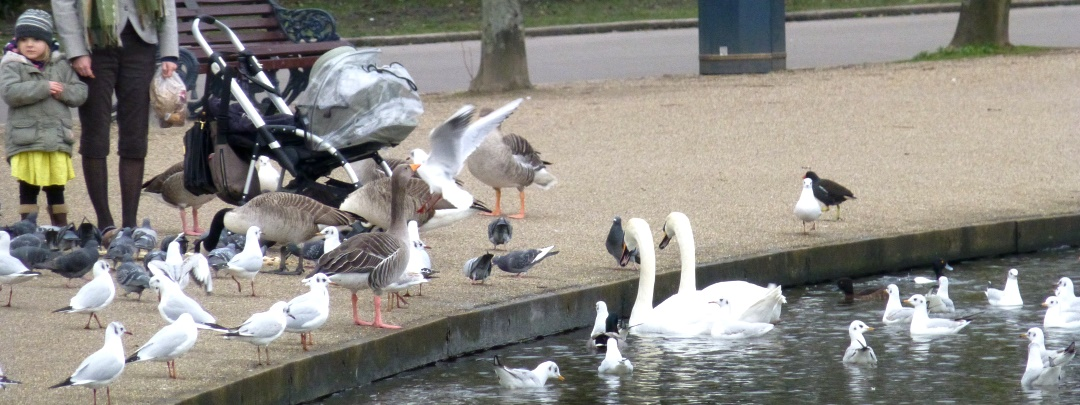 Feeding birds in Victoria Park