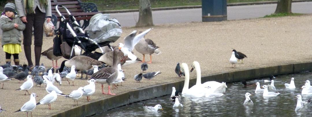 Feeding birds in Victoria Park