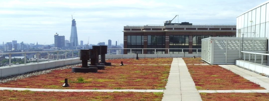 Green Roof, Canary Wharf