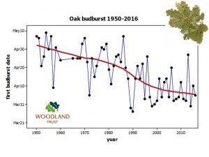 Graph of Oak budburst