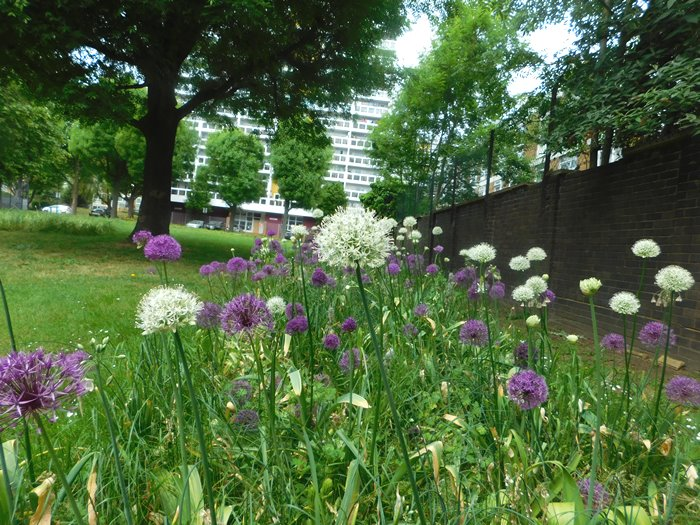 Bulbs at Sleaford House Green