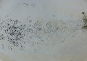 Rodent footprints