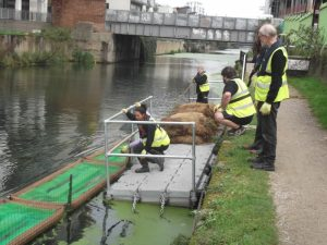 Installing vegetated raft in canal
