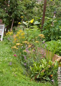 Nectar bar, Approach Gardens