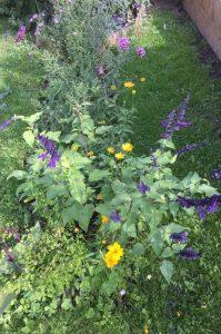 Nectar-rich perennials, Approach Gardens