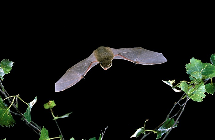 New Guidance On Bats And Lighting Published