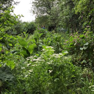 Medicinal meadow, Bethnal Green Nature Reserve