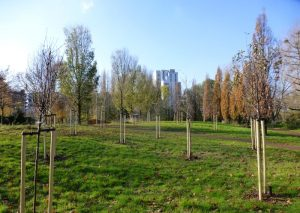 Newly-planted orchard