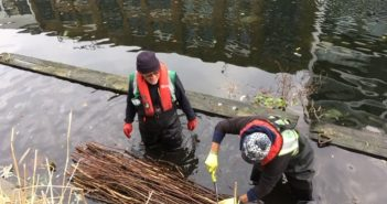 Creating reed beds in Regent's Canal