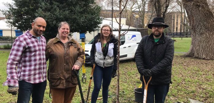 Planting fruit tree in Meath Gardens