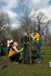 Tree planting in Victoria Park
