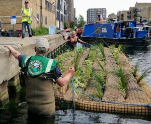 Volunteers launching vegetated rafts