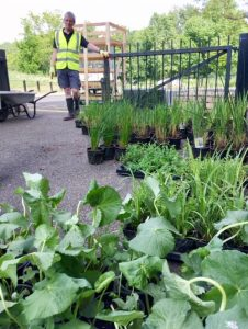 Wetland plants ready to plant