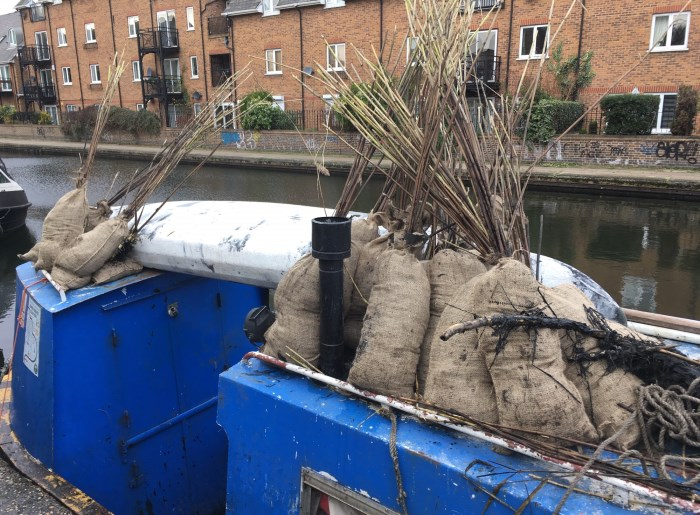 Reeds being moved by canal boat