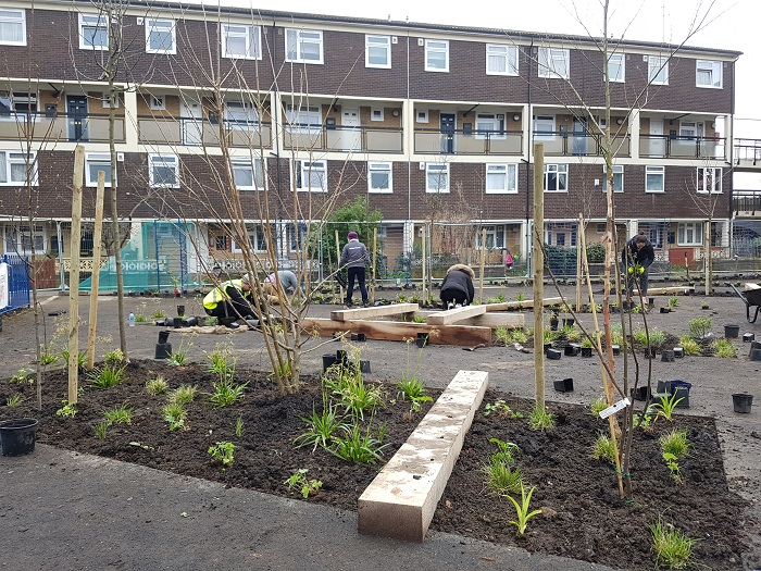 Volunteers planting at Ambrose Square