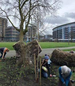 Volunteers planting tree