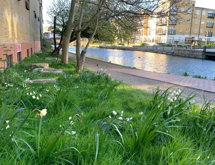 Spring flowers by the canal