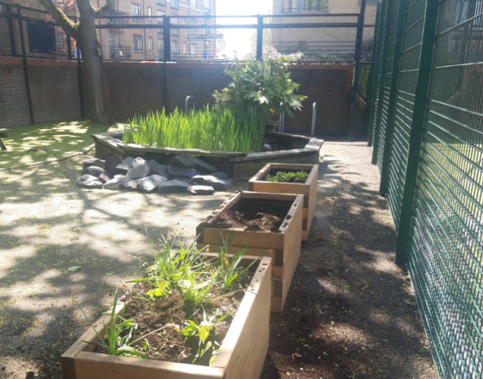 School pond and planters