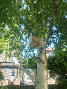 Nest box on tree