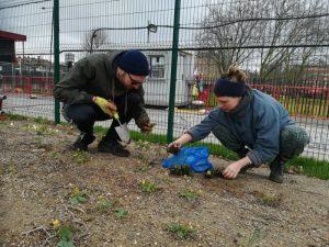 Volunteers planting wild flowers
