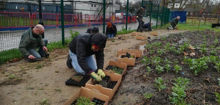 Volunteers planting a meadow
