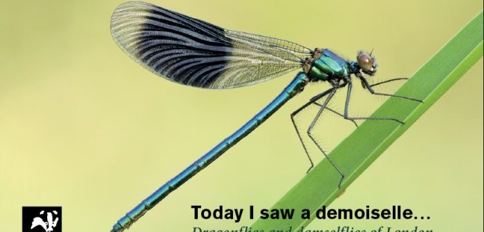 Cover of guide to London's dragonflies