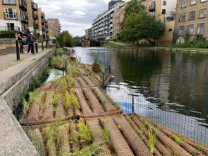 Photograph of people looking at vegetated rafts in the canal