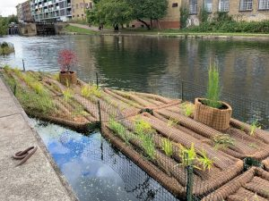 Photograph of vegetated rafts