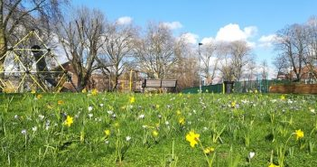 Photo of bulbs in flower in Shandy Park