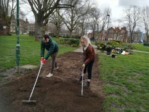 Photo of volunteers raking a seed bed