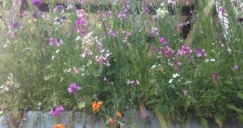 Window box with wild flowers