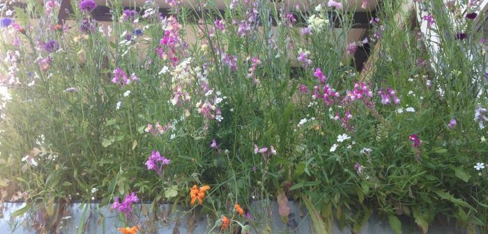 Window box with wild flowers