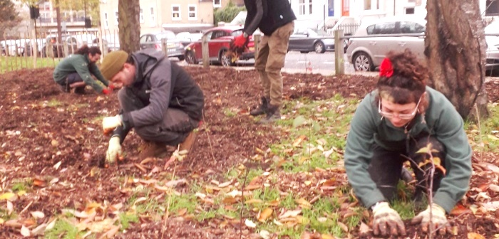Volunteers planting whips for a hedge